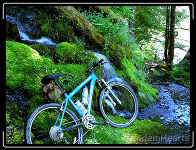 This series shows some of the trickier parts, where the trail was more of a stream on the side of a hill.